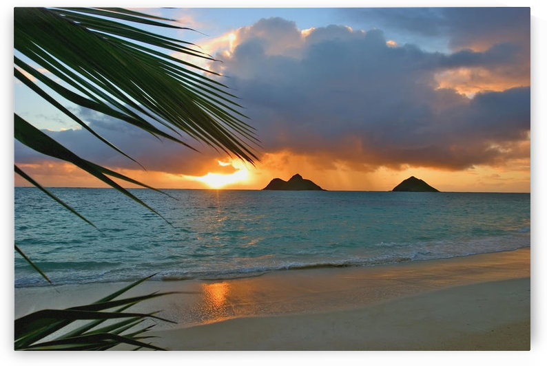 Hawaii, Oahu, Dramatic Sunrise At Lanikai Beach, Mokulua Islands, Palm Frond by PacificStock
