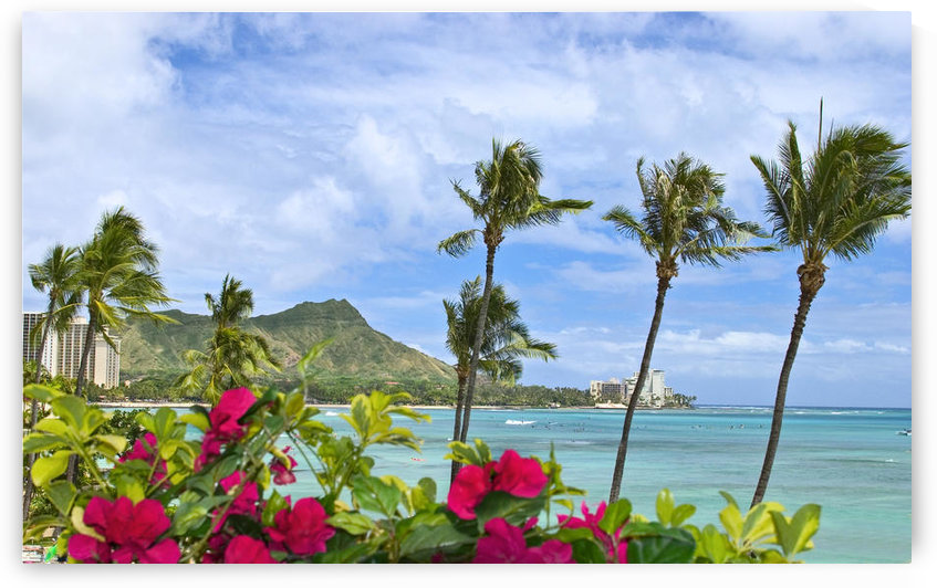 Hawaii, Oahu, Diamond Head, Waikiki, Palm Trees And Bougainvillea Foreground. by PacificStock