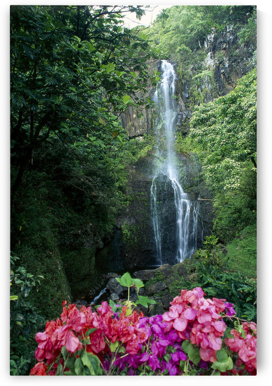 Hawaii, Maui, Wailua Waterfall And Rainforest, Bougainvillea In Foreground B1605 by PacificStock