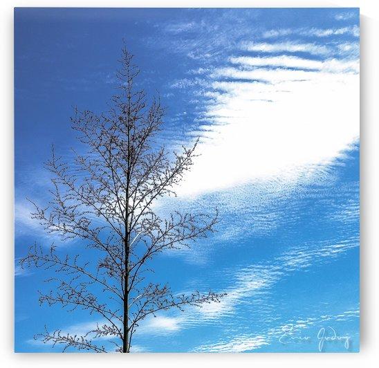 Tree, Sky & Clouds by Enio Godoy