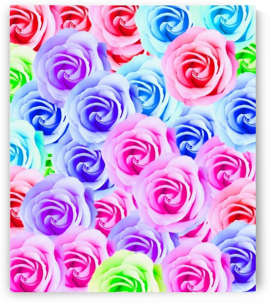 closeup colorful rose texture background in pink purple blue green by TimmyLA