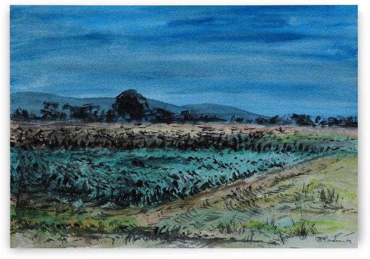 Field 7 by Pracha Yindee