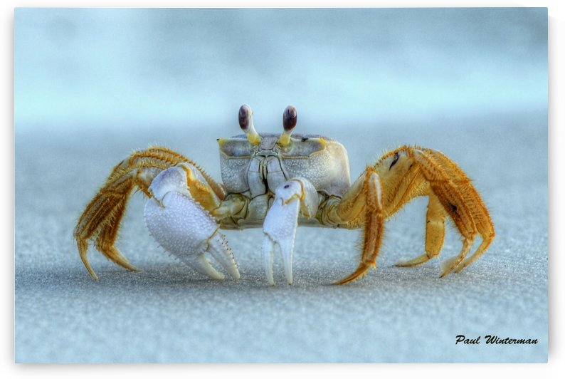 Ghost Crab by Paul Winterman