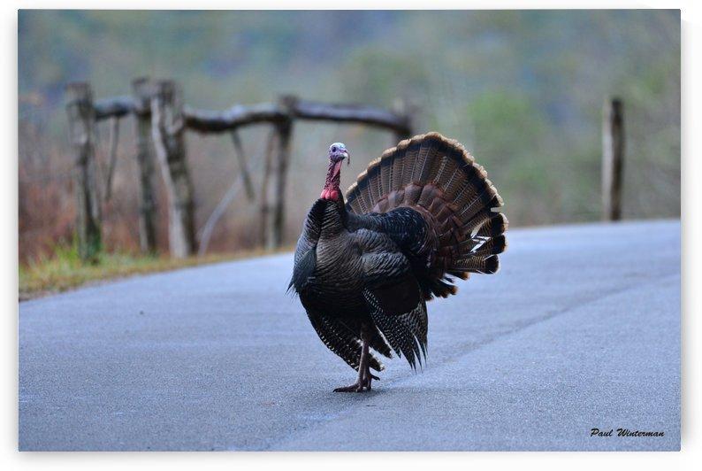 Turkey Time by Paul Winterman