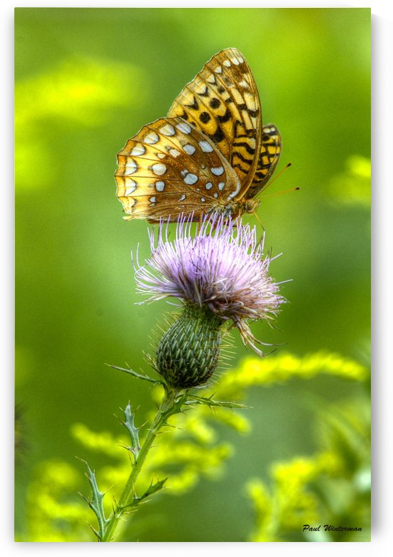 Thistle Nectar by Paul Winterman