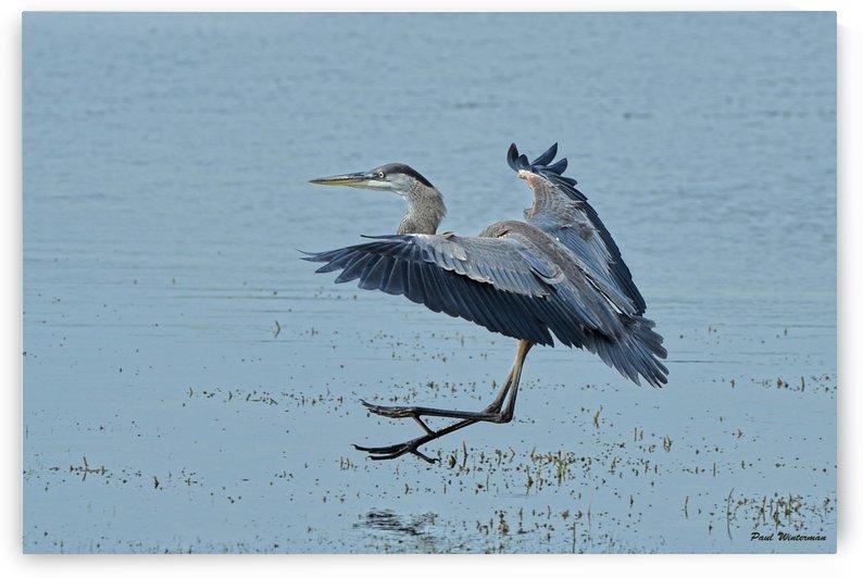 Landing by Paul Winterman