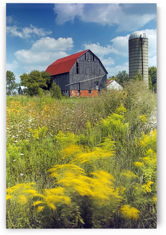 Farmyard, Niagara Peninsula, Near Binbrook, Ontario, Canada by PacificStock