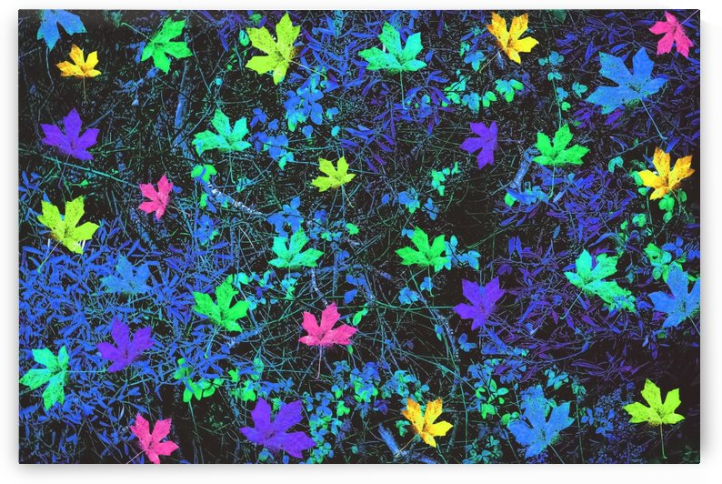 maple leaf in pink green purple blue yellow with blue creepers plants background by TimmyLA