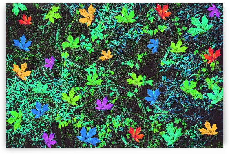 maple leaf in pink blue green yellow orange with green creepers plants background by TimmyLA