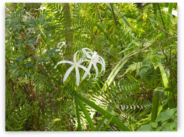 HDR Crinum lilies by PJ Lalli