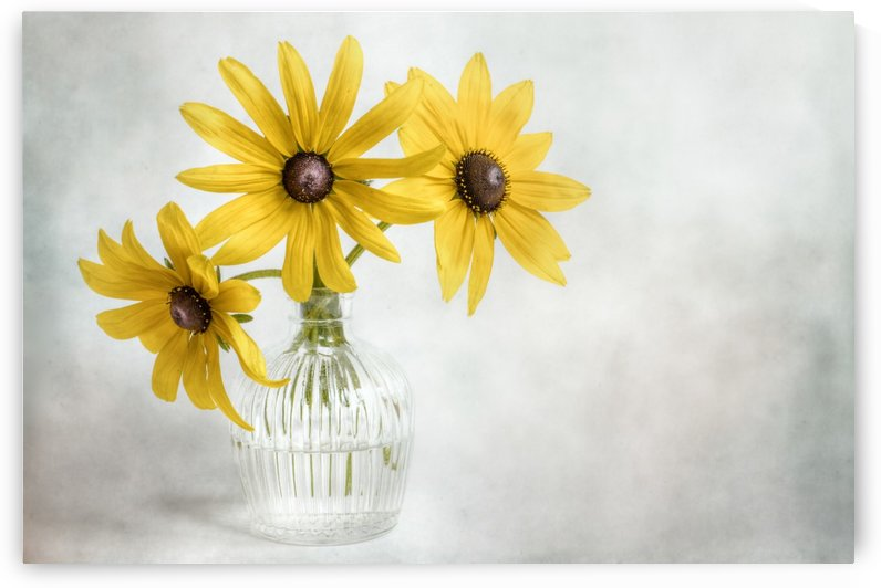 Rudbeckia by 1x