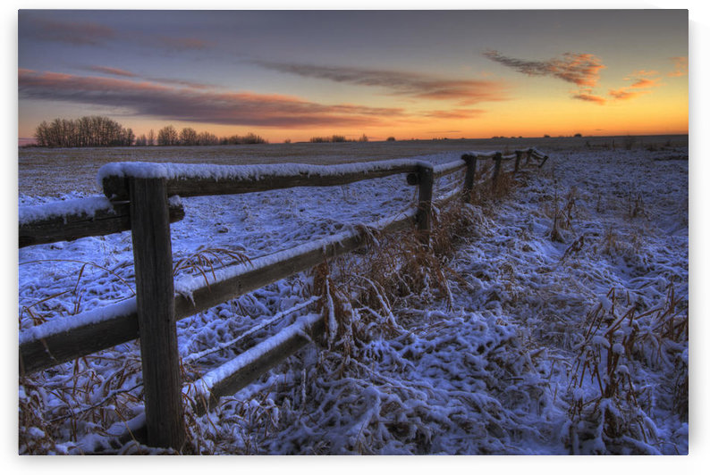 Early Morning Snow On A Cattle Fence, Rural Alberta by PacificStock