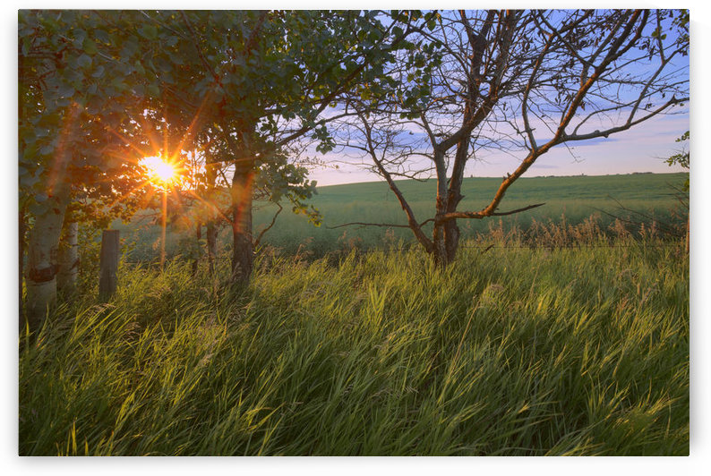 Sunrise On A Farm During The Summer In Central Alberta by PacificStock
