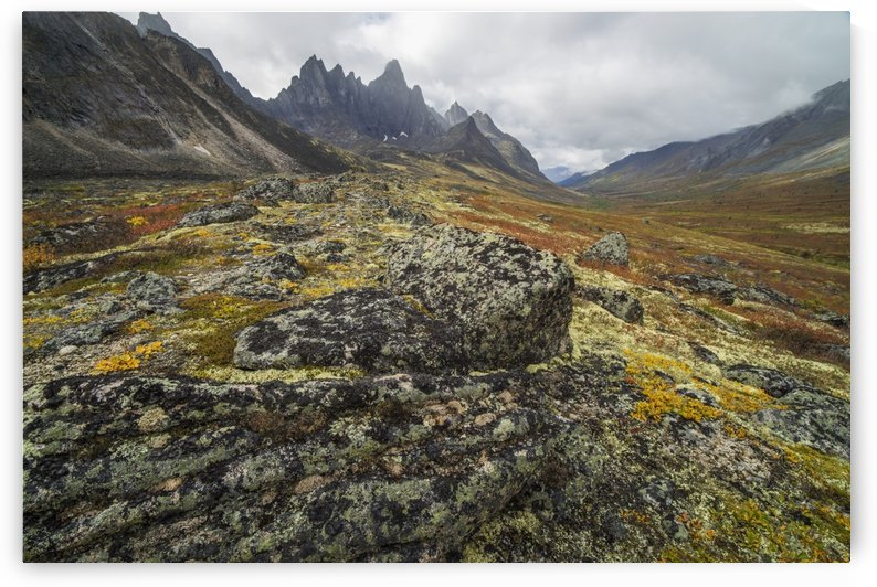 The Tombstone Valley in autumn colours with Tombstone Mountain rising above the tundra in Tombstone Territorial Park; Yukon, Canada by PacificStock