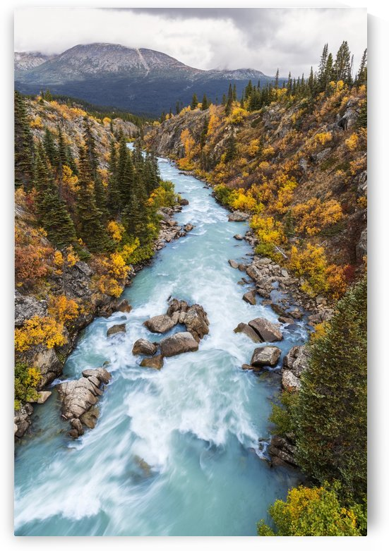 The Tutshi River canyon as seen from the suspension bridge, British Columbia, Canada, Fall. by PacificStock