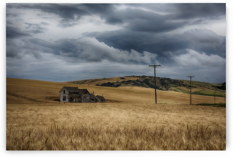 Old, rustic wooden house in the middle of a golden field under a stormy sky; Palouse, Washington, United States of America by PacificStock