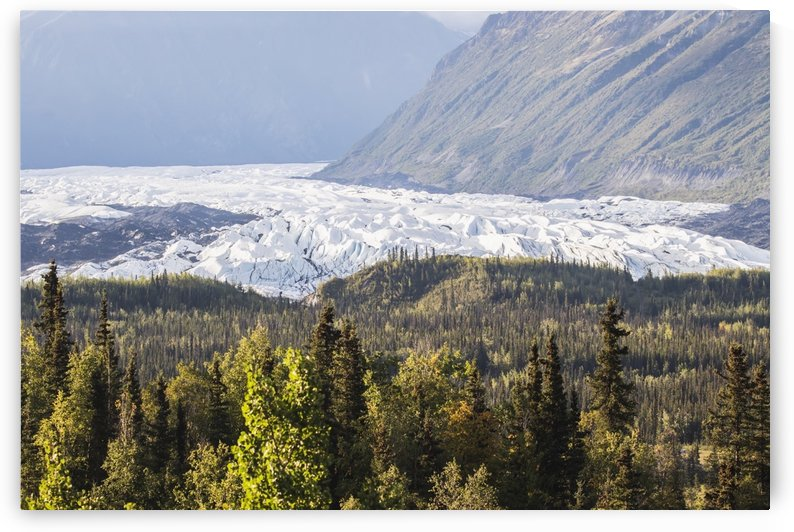 Matanuska Glacier viewed from Glenn Highway near Sheep Mountain, colourful summer foliage surrounding the glacier; Alaska, United States of America by PacificStock
