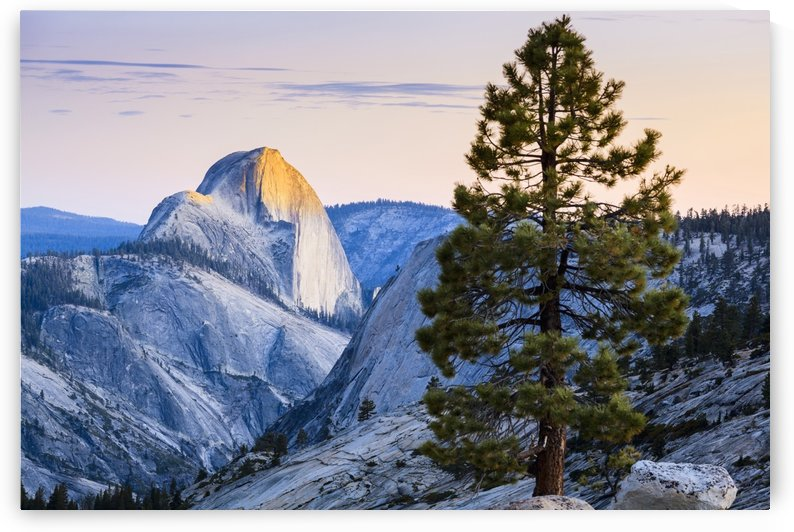 Half Dome seen from Olmsted Point, Yosemite National Park; California, United States of America by PacificStock