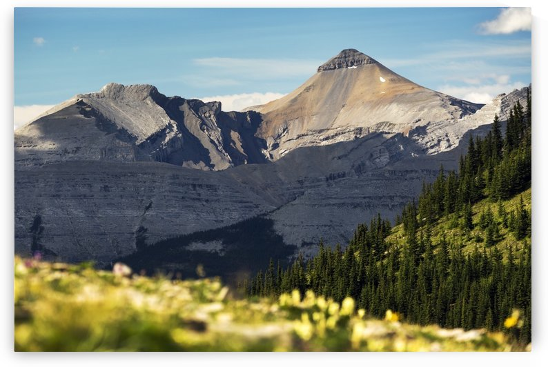 Mountain range with wildflowers on hillside in the foreground and blue sky; Bragg Creek, Alberta, Canada by PacificStock