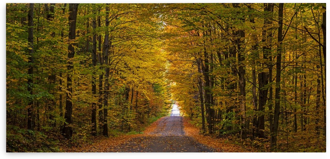 Panorama of country road in autumn; Iron Hill, Quebec, Canada by PacificStock