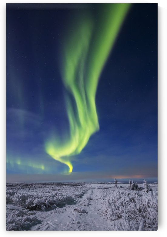 The aurora borealis shines above an ATV trail covered in snow, south of Delta Junction; Alaska, United States of America by PacificStock