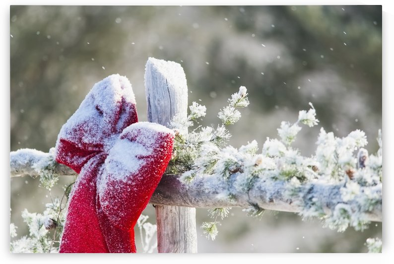 Fresh snow on holiday bow and decorations on fence post, Christmas season; Minnesota, United States of America by PacificStock