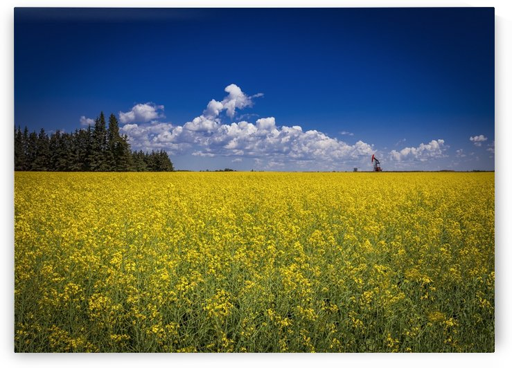 Canola field in bloom with a pumpjack in the distance; Devon, Alberta, Canada by PacificStock