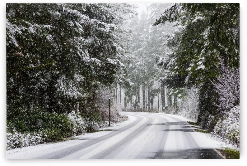Snow falls on trees and a road in Clatsop County; Astoria, Oregon, United States of America by PacificStock
