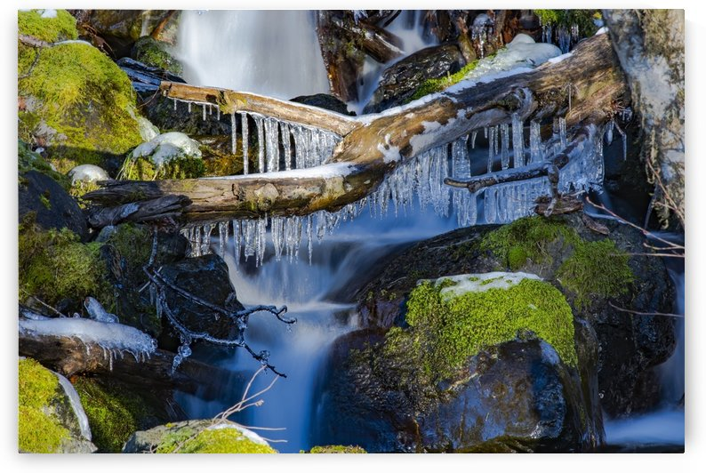 Collection of ice on a fallen log over a little waterfall in the Olympic Peninsula rain forest; Washington, United States of America by PacificStock