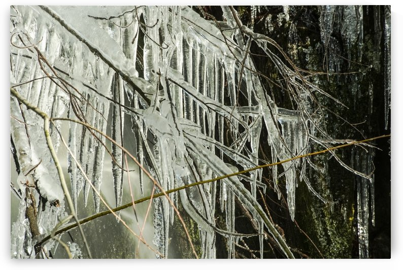 Long icicles forming from a branch next to a waterfall in the rain forest of the Olympic Peninsula; Washington, United States of America by PacificStock