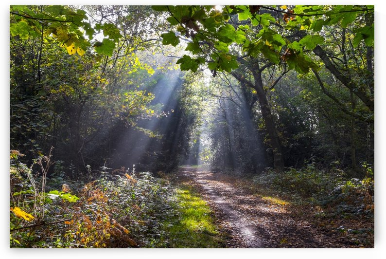 Sunlight floods a path in a forest in autumn; Surrey, England by PacificStock