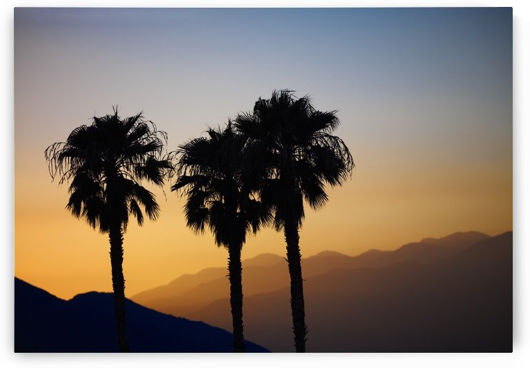 Silhouette of three palm trees at sunset with layers of mountains silhouetted in the background; Palm Springs, California, United States of America by PacificStock