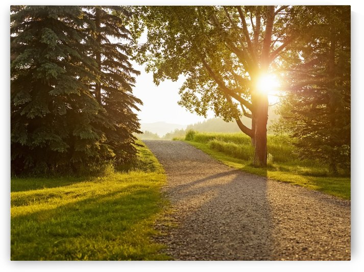 Sunlight shines through the trees lining a gravel path at sunset; Cochrane, Alberta, Canada by PacificStock