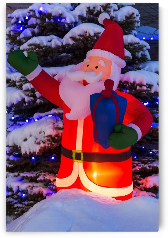 Glowing inflated Santa Claus Christmas decoration with Christmas lights on a snow covered evergreen tree; Calgary, Alberta, Canada by PacificStock