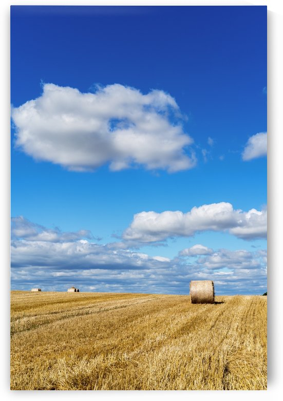 Hay bales on a cut field under a blue sky with cloud; Ravensworth, North Yorkshire, England by PacificStock