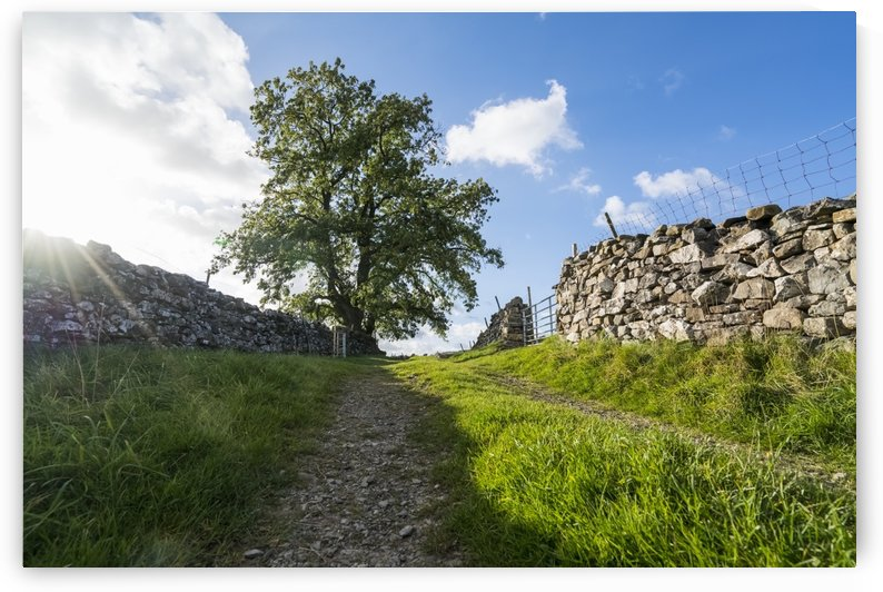 Gravel tracks between two stone walls leading towards a tree under a blue sky with cloud; North Yorkshire, England by PacificStock