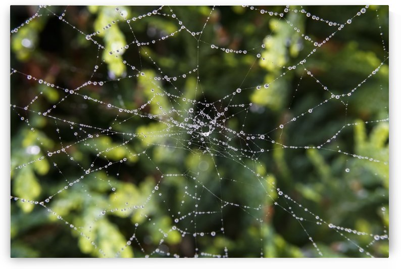 Water droplets on a spider web; North Yorkshire, England by PacificStock