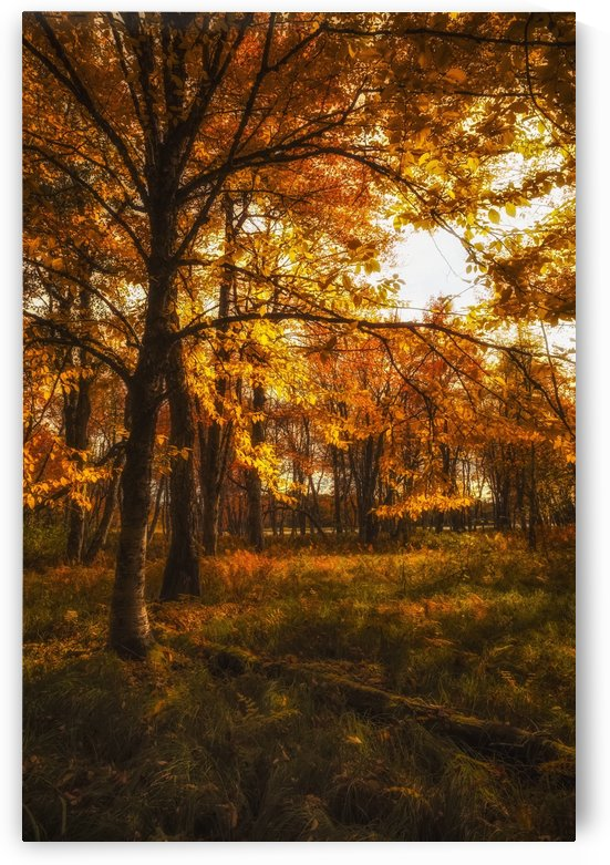 Forest meadow in glowing autumn colours near the floodplain of the Mersey River, Kejimkujik National Park; Nova Scotia, Canada by PacificStock