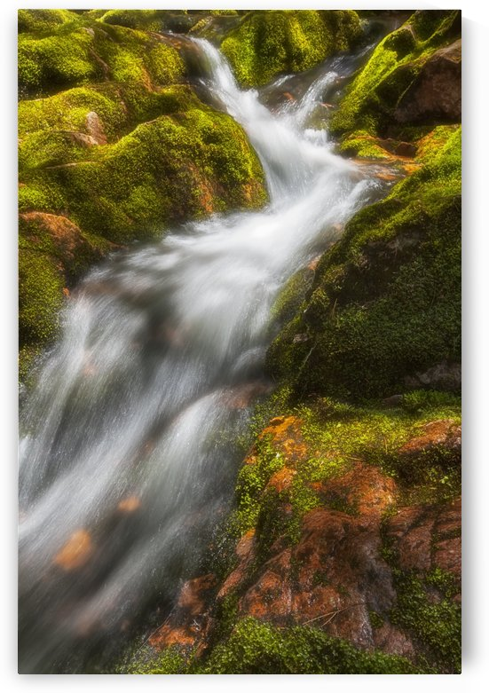 A brilliant spring sun highlights the tumbling white water and lush green mosses on Big Brook, Kelly's Mountain; Cape Breton, Nova Scotia, Canada by PacificStock