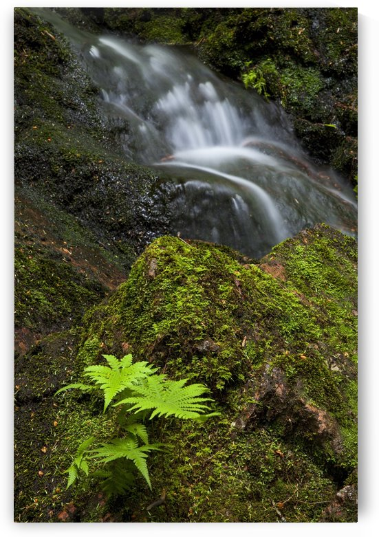 Along a section of Horse Pasture Brook; Wentworth Valley, Nova Scotia, Canada by PacificStock