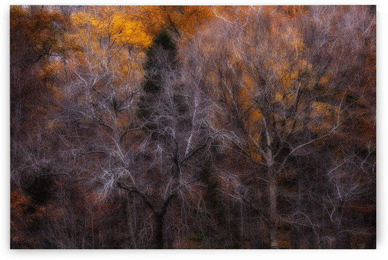 Forest in early November; Bedford, Nova Scotia, Canada by PacificStock