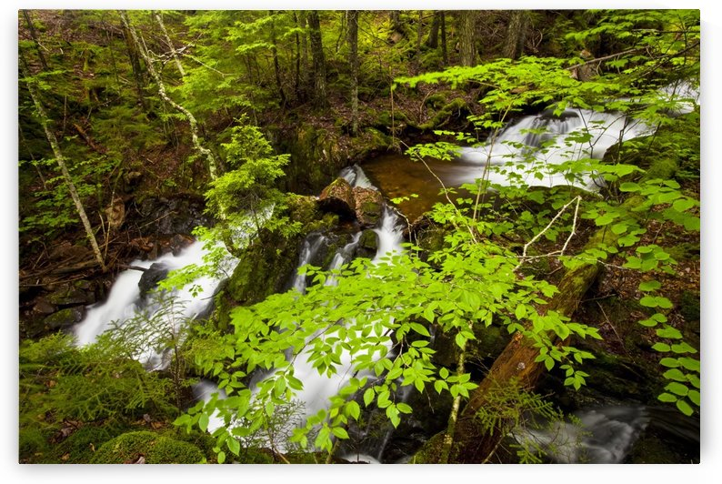 Spring waterfalls on Horse Pasture Brook; Wentworth Valley, Nova Scotia, Canada by PacificStock