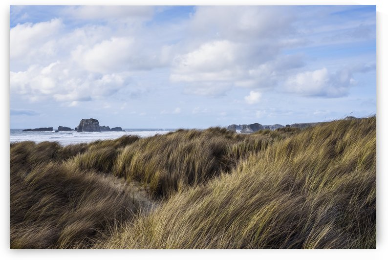 Grass and clouds frame a scene along the coast; Bandon, Oregon, United States of America by PacificStock