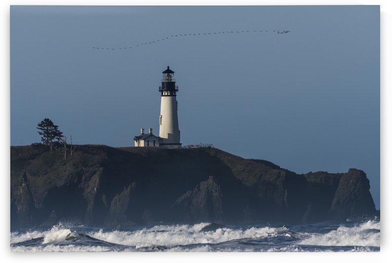 Cormorants (Phalacrocoracidae) fly over Yaquina Head Lighthouse on the Oregon Coast; Newport, Oregon, United States of America by PacificStock