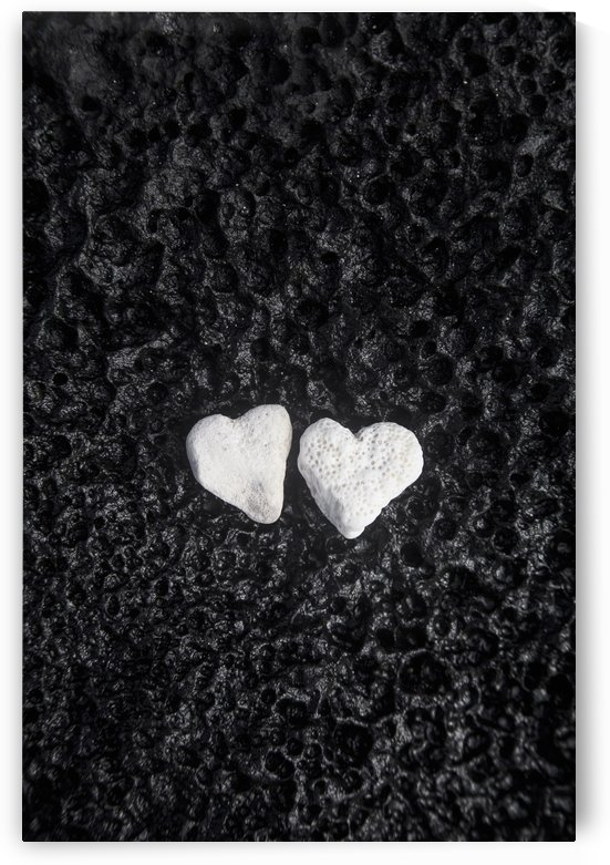 Two white coral heart shaped rocks placed together on a wet lava rock near the ocean; Honolulu, Oahu, Hawaii, United States of America by PacificStock