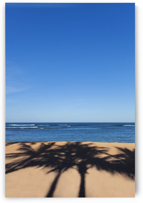 Palm tree shadows on the sand at the beach on a nice clear blue sky day; Honolulu, Oahu, Hawaii, United States of America by PacificStock