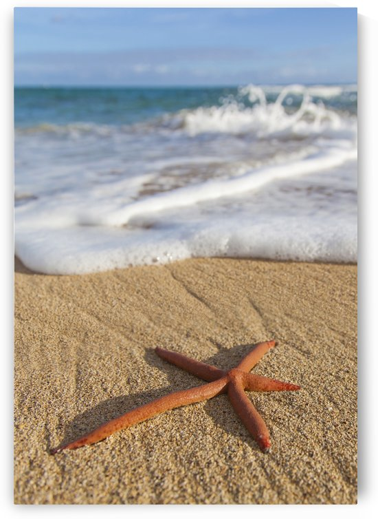 A red live Finger Starfish, also known as Linckia Sea Star, found along a sandy beach with white ocean tide washing up; Honolulu, Oahu, Hawaii, United States of America by PacificStock