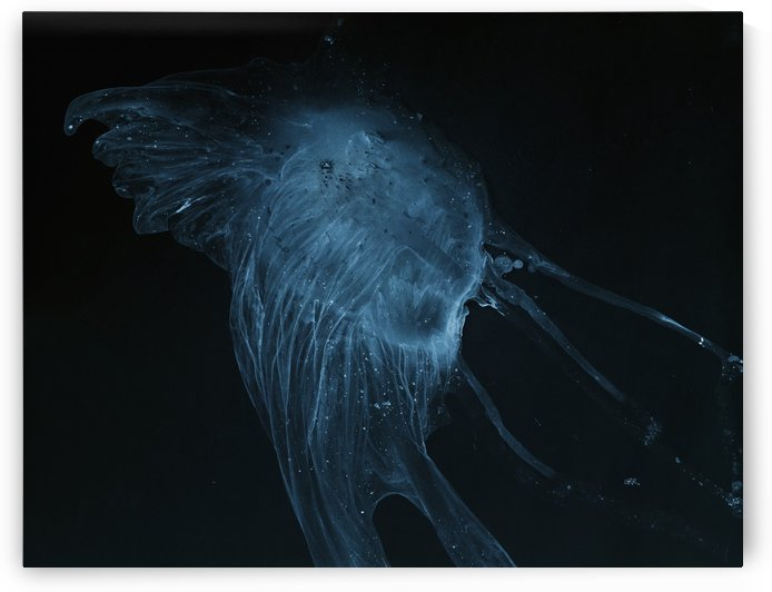 Glowing blue jellyfish in the dark water by PacificStock