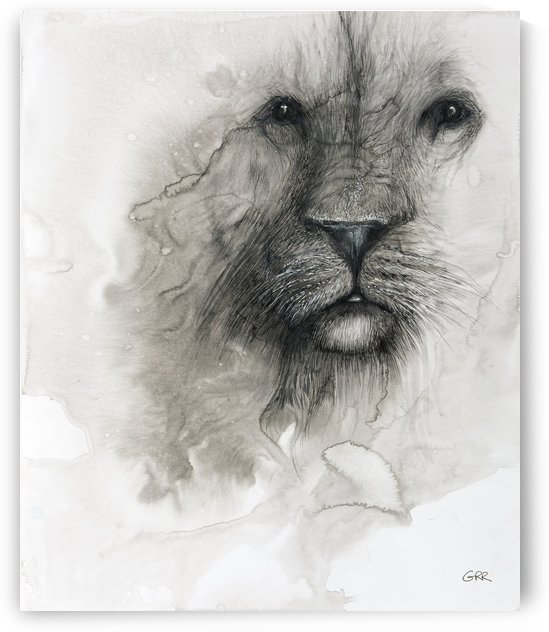 Illustration of a lion's face on a white background by PacificStock