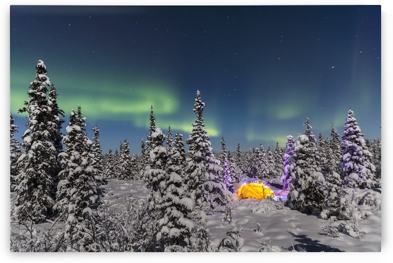 The Aurora Borealis dances over the top of a tent alight with string lights in the middle of an snowy evergreen forest, moonlight casting shadows on a clear winter night, interior Alaska; Gakona, Alaska, United States of America by PacificStock